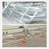 Broiler and Layer Chicken Cages for Poultry Farm (A Type)