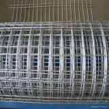 Hot Sale Galvanized Welded Wire Mesh