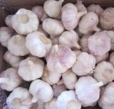 Fresh Normal White Garlic with Bag Packing