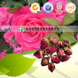 100% Pure Natural Herb Medicine Rosa Chinensis