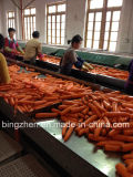 100g/150g/200g/250g Top Quality Fresh Carrots From China. Farmland