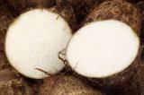 Best Price Fresh Sweet Taro Root