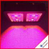 Free Shipping 300W Cheapest LED Grow Light for Wholesales