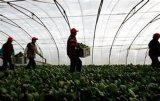 High Quality Greenhouse Vegetable Protect Net