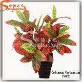 Hot Sale Artificial Bonsai Plant Flower for Decoration