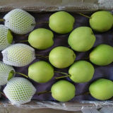 2016 Fresh Shandong Pear for Sale