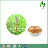 100% Natural Equisetum Arvense Extract 4: 1
