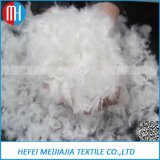Wholesale Washed Duck Down Feather Price