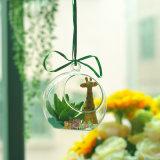 Handmade Creative Plant Hanging Glass