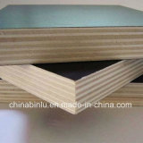 Constructional Film Faced Plywood Manufacturer for Building Plywood