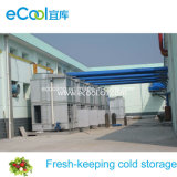Large Cold Room for Vegetables Fruits Fresh Keeping and Processing Warehouse and Distribution Center