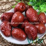 Organic Date, Chinese Date, Sweet Jujube, Dried Jujubefruit
