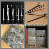Common Iron Nails with Head/Galvanized Concrete Steel Nails / Cement Nails