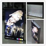 Free Standing Trade Show LED Light Boxes