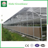 Manufacturer Price for Multi Span Venlo Type Glass Greenhouse
