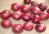 Top Quality Red Onion (3 cm and up)