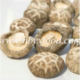 Dried Vegetable Tea Flower Mushroom