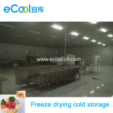 Super Low Temperature Large Size High Productivity Freeze Drying Cold Storage and Refrigerate Equipment for Seafood