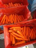 2017 Competitive Fresh Carrot with Good Quality