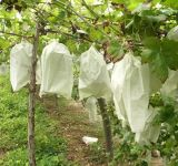 PP Non-Woven Fruit Covering