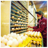 Automatic Egg Collection Machine