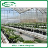 Poly film greenhouse for vegetables