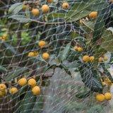 100% Vingin HDPE Knitting Anti-Bird Protection UV Stablised Plastic Net