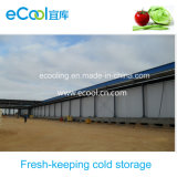 Large Size Fresh Keeping Cold Room for Vegetables Fruits Distribution Center and Warehouse