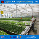Nft Hydroponics Growing System for Vegetable Plant