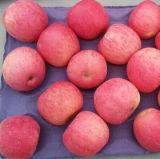 High Quality of Fresh Red FUJI Apple