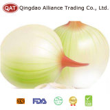 White Peeled Onion with High Quality