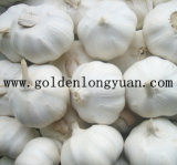 Exporting Quality Chinese White Garlic