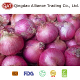 Top Quality Fresh Red Onion with Good Price