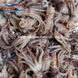 Producing Frozen Food North Pacific Squid Head