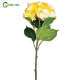 High Quality Hydrangea Flower in Various Colours