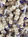 New Crop China Purple White Garlic