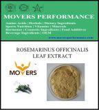 Hot Slaes Cosmetic Ingredient: Rosmarinus Officinalis Leaf Extract