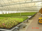 Movable Seedbed for Agricultural Greenhouse