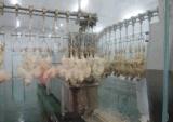 Chicken Scalder Plucker Machine for Slaughter