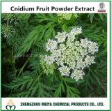 Factory Supply Natural Cnidium Fruit Powder Extract with Osthole 10%-98% Assay