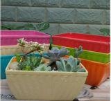 Assorted Colors Biodegradable Bamboo Fiber Flower Pots Garden Flower Pots (BC-FP1028)