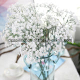Widely Used Plastic Gypsophila Artificial Flowers in Decoration (SF10875)
