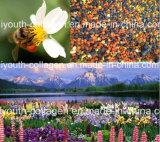 Top 100%Natrual Wild Bee Pollen, Rare Pollen, No Antibiotics, No Pesticides, No Pathogenic Bacteria, Anticancer, Nourish The Internal Organs, Prolong Life