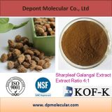 Sharpleaf Galangal Extract, Yi Zhi Ren, Cognition Enhancer