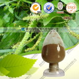 Natural 100% Asiatic Plantain Extract
