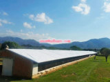 Qingdao Hapy Chicken Farm with Automatic Equipment