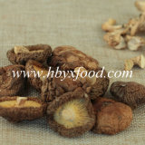 Pure Natural Organic Smooth Shiitake