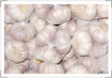 Fresh Garlic New Crop Strong Flavor Good Quality