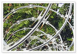 Razor Wire for Security Fence
