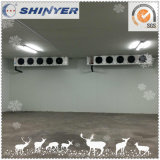 Xinyue Cold Storage Room Projects Since 1982